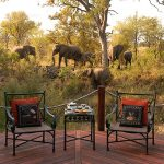 Hoyo Hoyo Safari Lodge Elephants