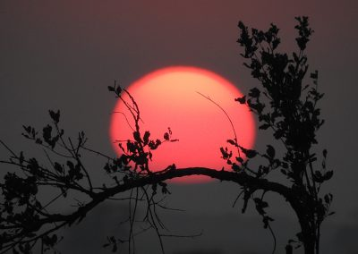 Kruger-National-Park-Sunrise