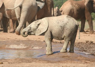 Addo Elephant National Park Hapoor Waterhole