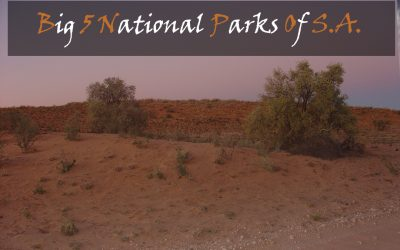 Big 5 National Parks Of South Africa