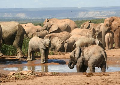 Hapoor Waterhole - Addo Elephant National Park