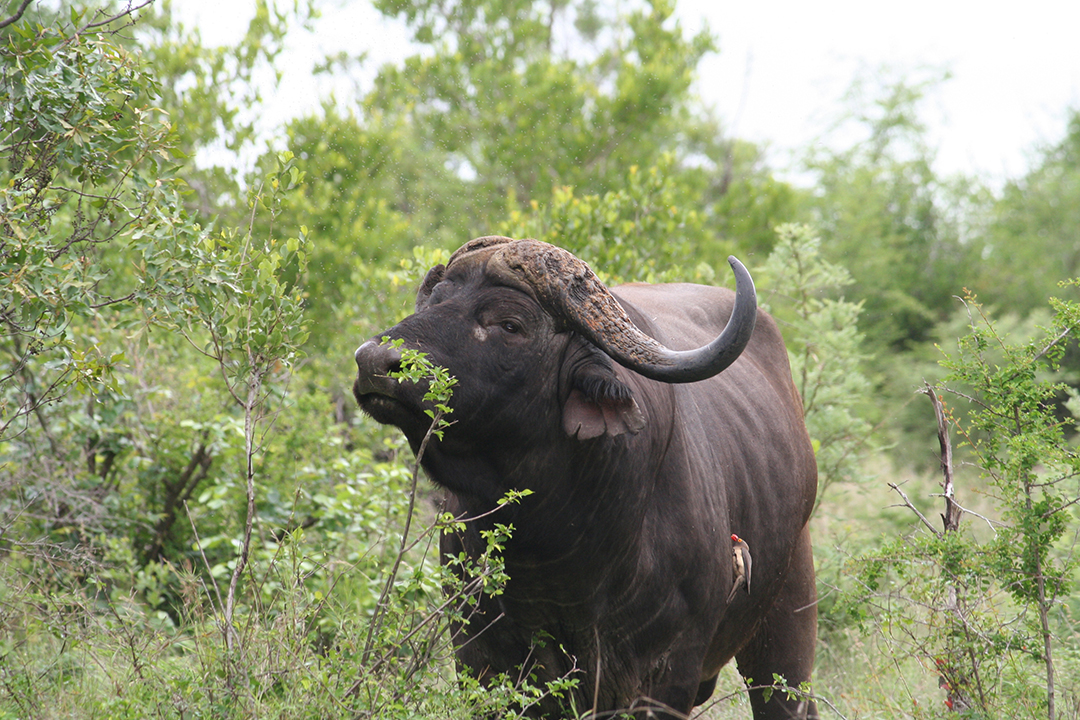 Stories Of The Kruger Park Animals Mammal