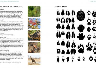 And Animal Tracks