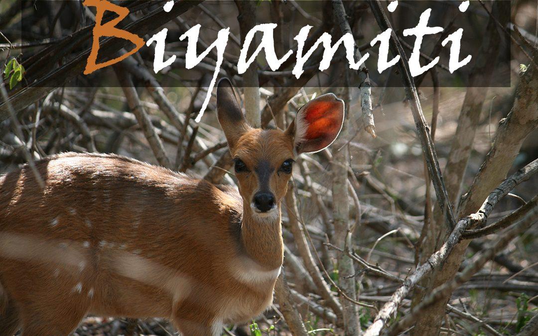 Biyamiti Camp Stories