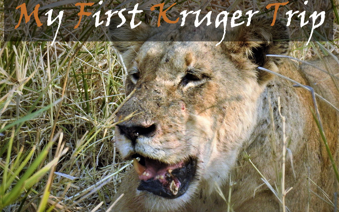 My First Kruger Trip