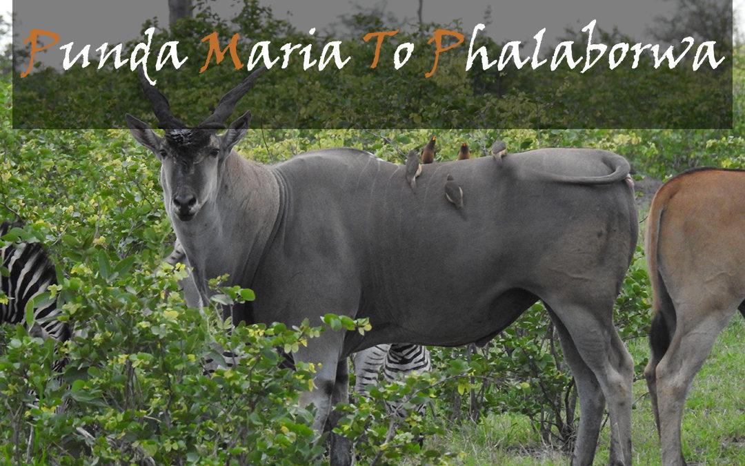 Punda Maria To Phalaborwa