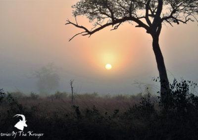 Morning Mist Sunrise At Crocodile Bridge Kruger Park